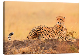 Canvas print  Cheetahs place