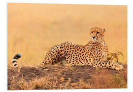 Foam board print  Cheetahs place
