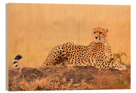 Wood  Cheetahs place