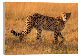 Wood print  Cheetah looking for its prey