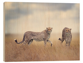 Wood print  Cheetahs on the hunt