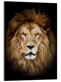 Acrylic glass  King of the Jungle Portrait
