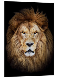 Aluminium print  King of the Jungle Portrait