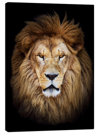 Canvas print  King of the Jungle Portrait