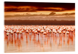 Acrylic print  Flamingos at sunset