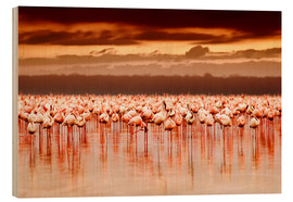 Wood print  Flamingos at sunset
