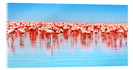 Acrylic print  Flamingo in the lake Nakuru
