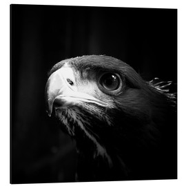 Aluminium print  view of the young eagle