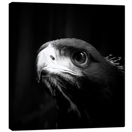 Canvas print  view of the young eagle