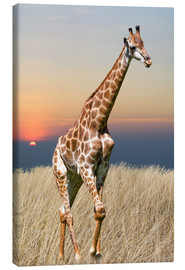Canvas print  Giraffe - African wilderness