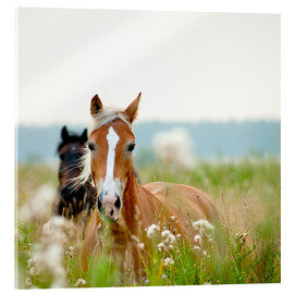 Acrylic glass  Haflinger with wildflowers