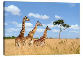 Canvas print  Giraffe Trio
