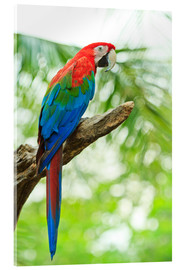 Acrylic print  Tropical parrot