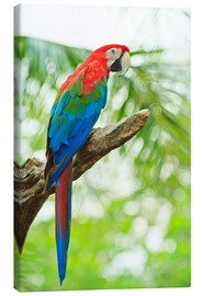 Canvas print  Tropical parrot