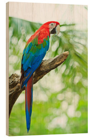 Wood  Tropical parrot