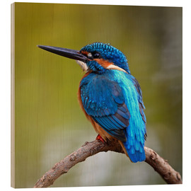 Wood print  Kingfisher on a branch