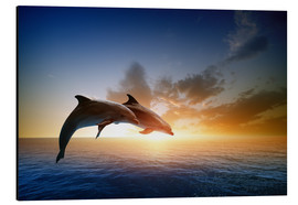 Alu-Dibond  Dolphins in the sunset
