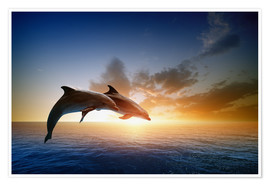 Premium poster  Dolphins in the sunset