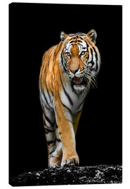 Canvas  male Tiger