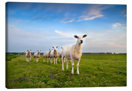 Canvas print  Sheep on the dike