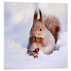Acrylic print  Squirrel in the snow