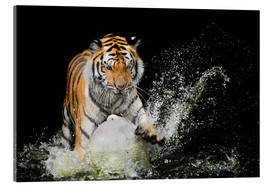 Acrylic print  Tiger Makes the water