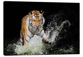 Canvas  Tiger Makes the water