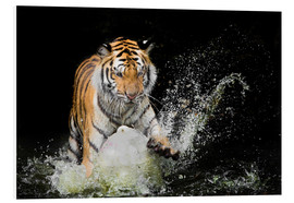 Forex  Tiger Makes the water