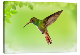 Canvas print  hummingbird