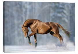 Canvas print  Horse in snow