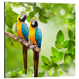 Alu-Dibond  2 blue and yellow parrot