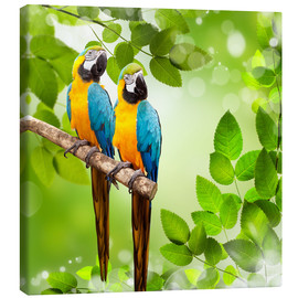 2 blue and yellow parrot