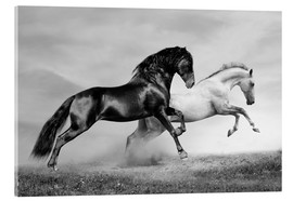 Acrylic glass  Horses black and white
