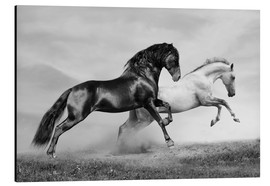 Aluminium print  Horses black and white