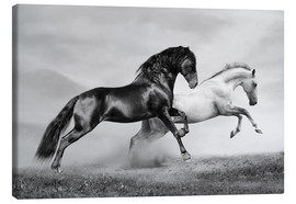 Canvas print  Horses black and white