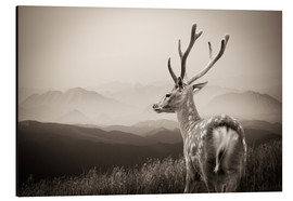 Stag in the mountains