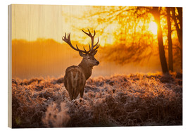 Wood print  Red Deer in Morning Sun