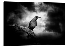 Acrylic print  Raven in the moonlight
