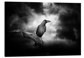 Aluminium print  Raven in the moonlight