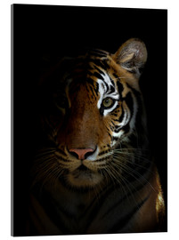 Acrylic print  bengal tiger head in the dark night