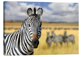 Canvas print  View of zebras