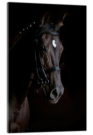 Acrylic glass  Dressage horse in profile