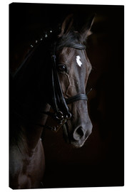 Canvas  Dressage horse in profile