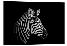 Acrylic print  Zebra - close up