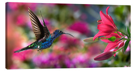 Canvas  Hummingbird (Archilochus Colubris) with lilies