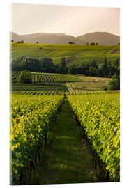 Acrylic glass  Vineyards in the late afternoon, Pfalz