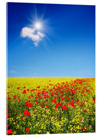 Acrylic print  Sunny landscape with flowers in a field