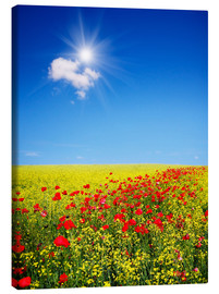 Canvas print  Sunny landscape with flowers in a field