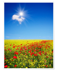 Premium poster  Sunny landscape with flowers in a field