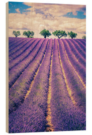 Wood print  Lavender field with trees in Provence, France